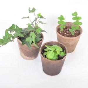 [식물/화분/봄/씨앗]리틀가든에코포트