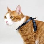 모더나 캣츠인 러브 더블 트렌디 디너 고양이 강아지 밥그릇 (화이트)가격:10,000원