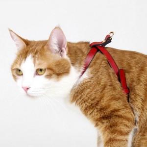 프리미엄 I형 고양이 가슴줄(하네스) 레드 (XXXS,XXS,XS,S,M,L,XL)가격:35,000원