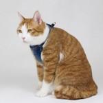 프리미엄 T형 고양이 가슴줄(하네스) 블루 (XXXS,XXS,XS,S,M,L,XL)가격:38,000원