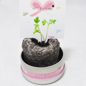 [식물/화분/봄/씨앗] 리틀가든 캔 + 새싹카드