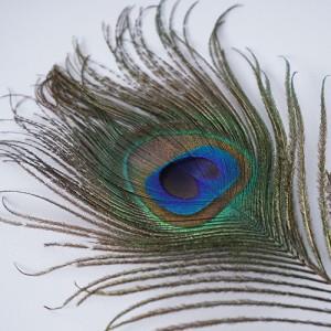 공작깃털 고양이 장난감 70cm가격:5,000원