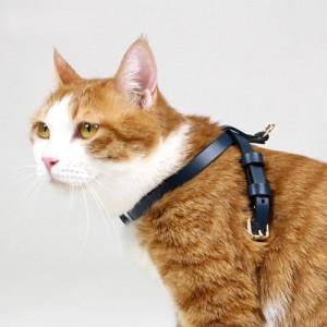 프리미엄 I형 고양이 가슴줄(하네스) 블루 (XXXS,XXS,XS,S,M,L,XL)가격:35,000원