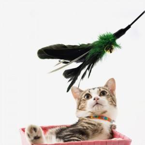 고양이 꿩깃털 낚시대가격:4,000원