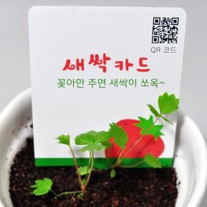 리틀가든 새싹카드(단품)
